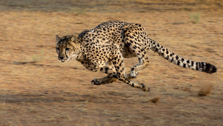 WordPress sneller maken met .htaccess